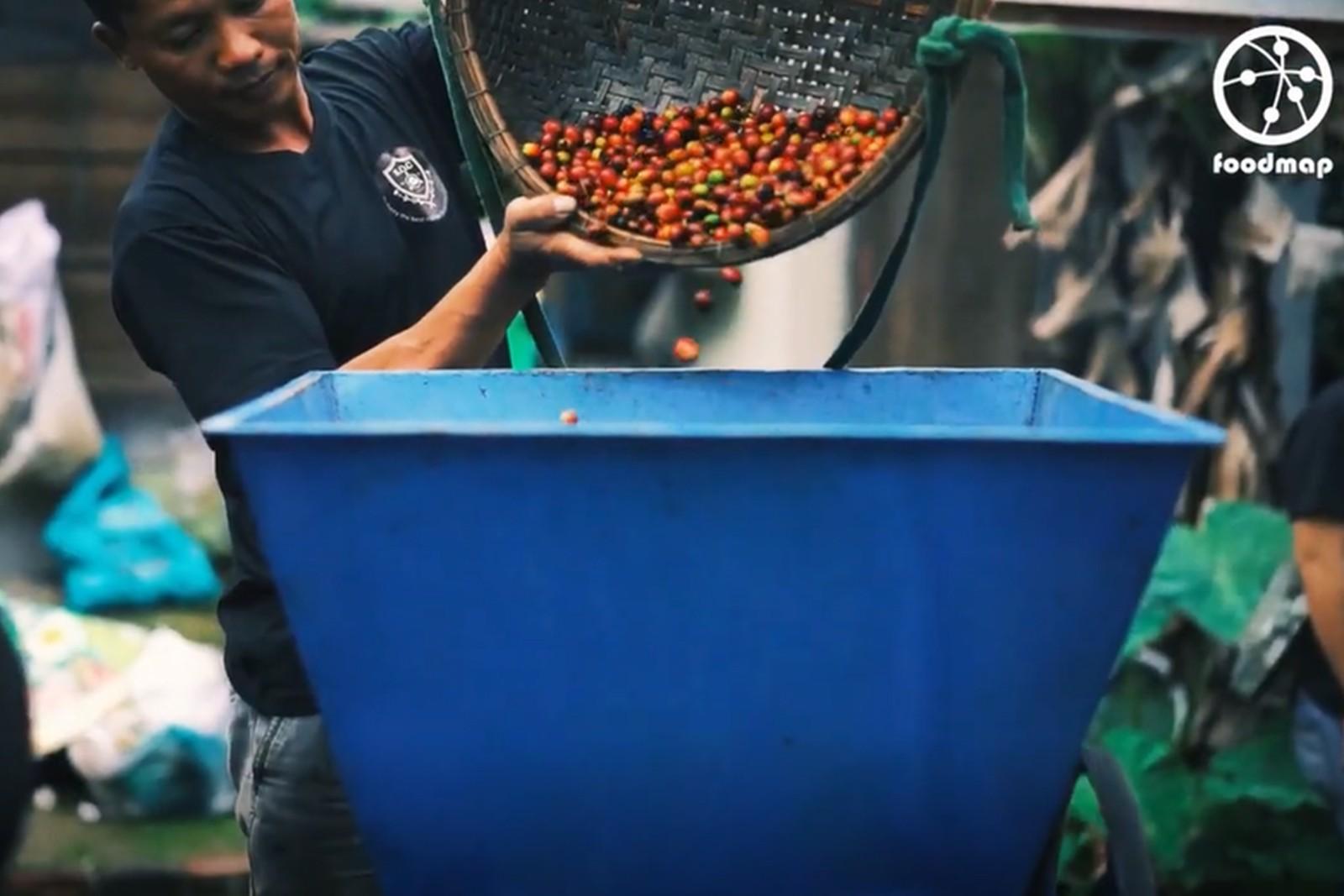 Quy trình chế biến cà phê nhân theo phương pháp ướt
